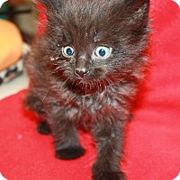 Adopt A Pet :: Drizella - Sparta, NJ