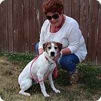 Adopt A Pet :: Mikel - Elyria, OH