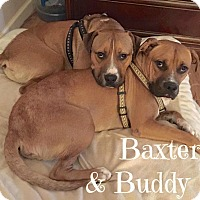 Adopt A Pet :: Baxter & Buddy (Courtesy Post) - Scottsdale, AZ