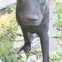 Adopt A Pet :: JoJo - St Petersburg, FL