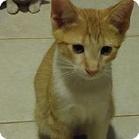 Adopt A Pet :: Beans (foster care) - Philadelphia, PA