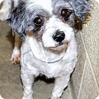Adopt A Pet :: Sandy - San Jacinto, CA