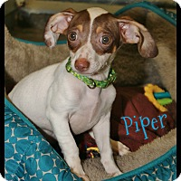 Adopt A Pet :: Piper - Shippenville, PA