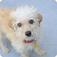Adopt A Pet :: Clarity - Salt Lake City, UT