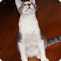 Adopt A Pet :: Desi - Morganton, NC