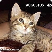 Adopt A Pet :: Augustus - Spring, TX