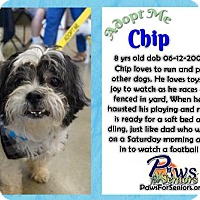 Adopt A Pet :: Chip - Bealeton, VA