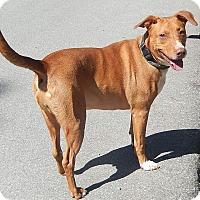 Adopt A Pet :: Buddy - Newport, NC