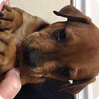 Adopt A Pet :: Reed - Ft. Lauderdale, FL