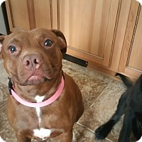 Adopt A Pet :: Biddy - West Allis, WI