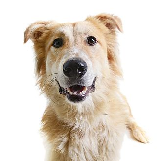 Collie Mix Dog for adoption in Wilmington, Delaware - Mazyoun (Rafiki) *FEE REDUCED*