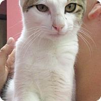 Adopt A Pet :: York - Reeds Spring, MO