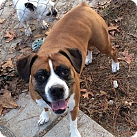 Adopt A Pet :: Mollie Joy - Irmo, SC