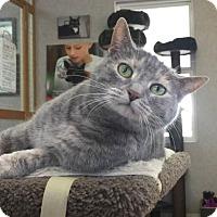 Adopt A Pet :: Chloe - Manchester, MO