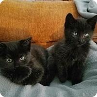 Adopt A Pet :: Teeter - Parlier, CA