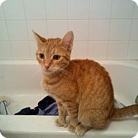 Adopt A Pet :: Zanders - wayne, MI