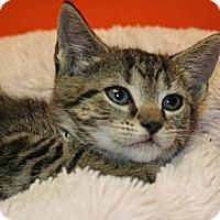 Adopt A Pet :: TATIANA - SILVER SPRING, MD