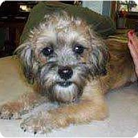 Adopt A Pet :: George - Richmond, VA