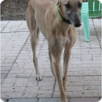 Adopt A Pet :: Maria - Canadensis, PA