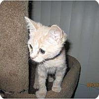 Adopt A Pet :: Frankie - Catasauqua, PA