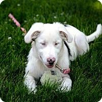 Adopt A Pet :: Iris - Adoption Pending - Midwest (WI, IL, MN), WI