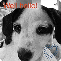 Adopt A Pet :: Chip - Norwalk, CT