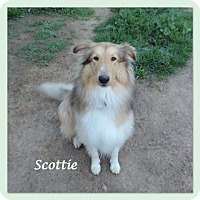 Adopt A Pet :: Scottie - Riverside, CA