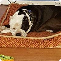 Adopt A Pet :: Uni -  Mellow Little Girl - Snohomish, WA