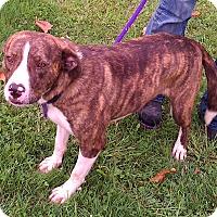 Adopt A Pet :: Bonnie - Metamora, IN
