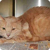 Adopt A Pet :: ON EUTHANASIA LIST - Only $15 - Litchfield Park, AZ