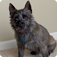 Adopt A Pet :: Jared-pending adoption - Omaha, NE