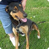 Adopt A Pet :: REX - Chewelah, WA
