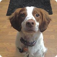 Adopt A Pet :: CO/Trevor - Seattle, WA