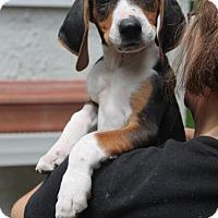 Adopt A Pet :: Diglet - Mt. Prospect, IL