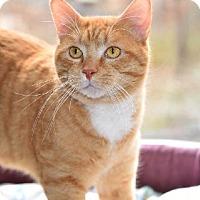 Adopt A Pet :: Flynn - Adoption pending - Liberty, NC