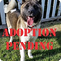 Adopt A Pet :: Xena, Warrior Princess - Santa Clarita, CA