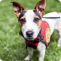 Adopt A Pet :: Winnie (Has application) - Washington, DC