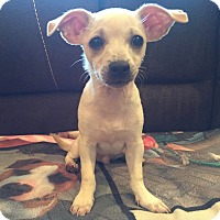Adopt A Pet :: Darwin - Bristol, CT