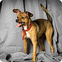 Adopt A Pet :: La Miles - Tulsa, OK