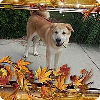 Adopt A Pet :: vincent - Gadsden, AL