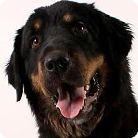 Adopt A Pet :: Valda - Glendale, AZ