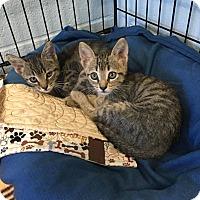 Adopt A Pet :: Little Wolf - Carencro, LA