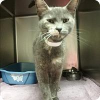 Adopt A Pet :: juliet - Muskegon, MI