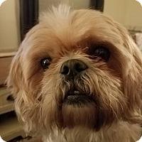 Adopt A Pet :: Duncan - Sharon Center, OH