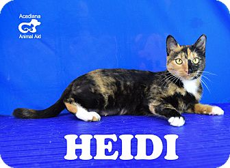 Calico Cat for adoption in Carencro, Louisiana - Heidi