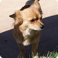 Adopt A Pet :: Tory - Apple Valley, UT