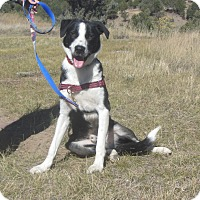 Adopt A Pet :: Odin - Ridgway, CO