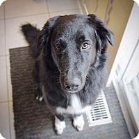 Adopt A Pet :: PRINCE CHARMING - Toronto, ON