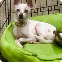 Adopt A Pet :: Sunshine - Nashville, TN