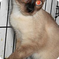 Adopt A Pet :: Minka - Chattanooga, TN